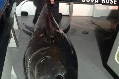 bluefin12
